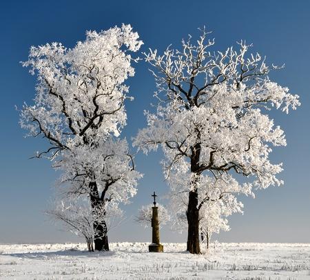wintrily: Albero di inverno in Repubblica Ceca