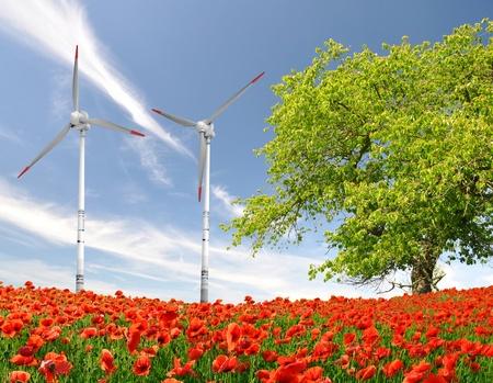 red poppy field with wind turbine  photo