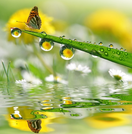krople wody na zielonej trawie z motylem