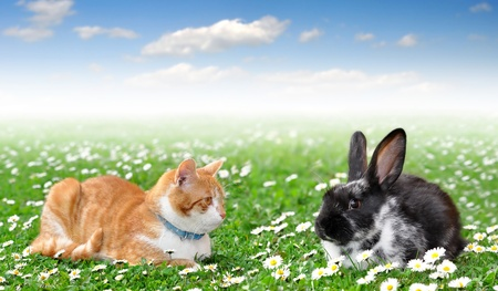 cute rabbit with cat photo
