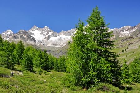 swiss alps: Beautiful mountain Ober Gabelhorn - Swiss alps