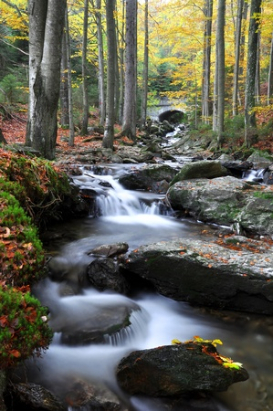 autumn creek in Czech Republic photo