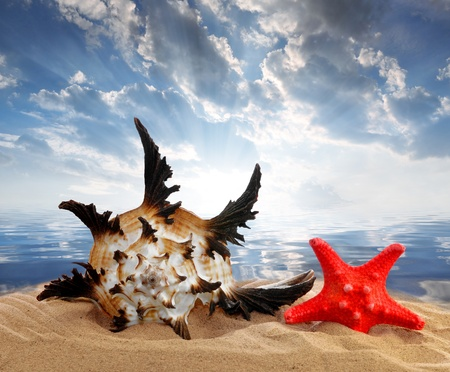 Conch shell with starfish on beach  photo