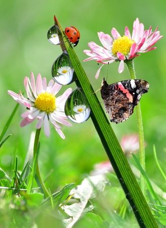 water drop on green grass with butterfly and ladybug photo
