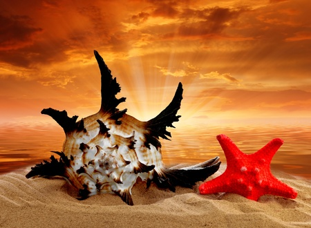 Conch shell with starfish on beach in the sunset Stock Photo - 12026361