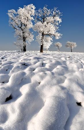 wintrily: inverno, albero in Repubblica Ceca
