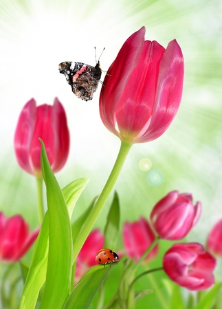 pink tulips with butterfly and ladybug photo