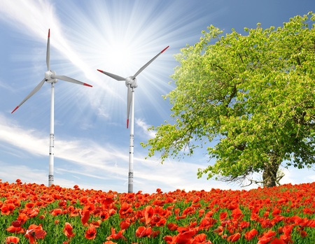 red poppy field with wind turbine  photo