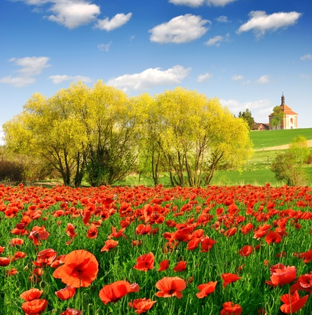 spring landscape with red poppy field photo