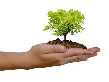 groeiende boom in de hand geïsoleerd op witte achtergrond Stockfoto