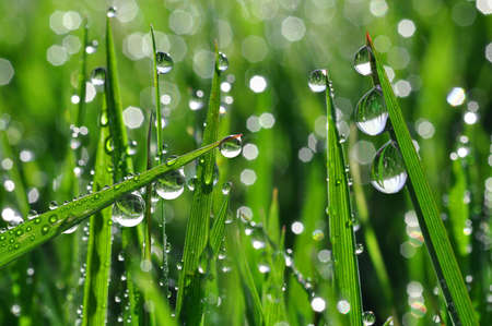 Fresh grass with dew drops close up  Stock Photo - 12417145