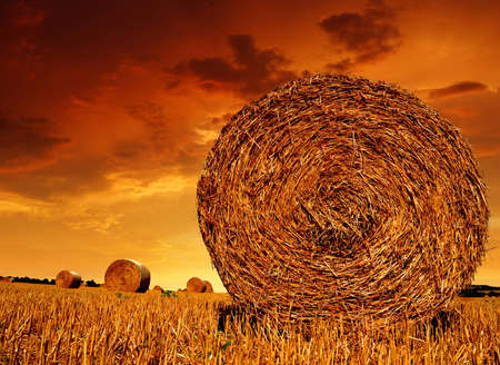 Straw bales on farmland with red cloudy sky  photo