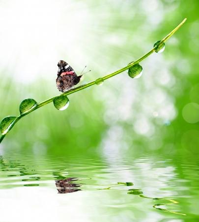 verse ochtenddauw en vlinder