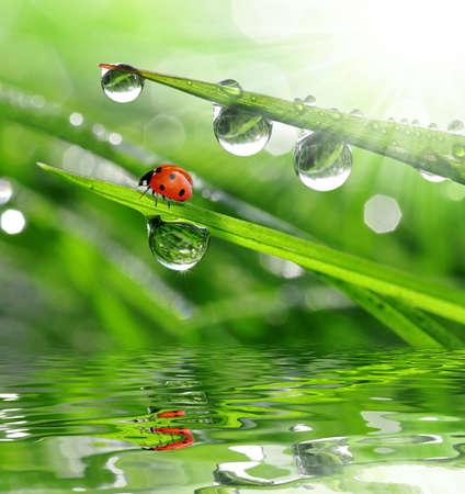 undulation: fresh morning dew and ladybird
