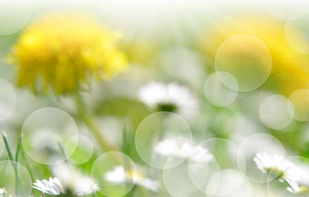 nature spring bokeh background with sun beam  photo