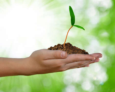 seedling growing: growing green plant in hand on green background
