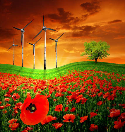 red poppy field with wind turbine in the sunset photo