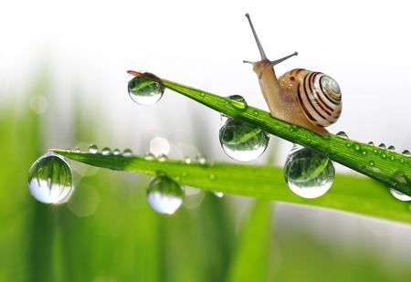 Snail on dewy grass  스톡 콘텐츠