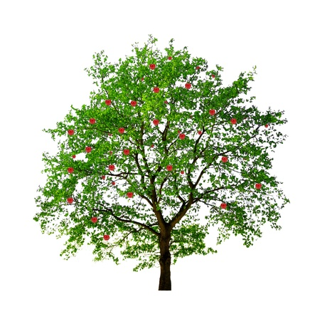 pommier arbre: pommier isol� sur fond blanc