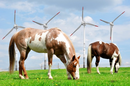 Horse in the meadow In the background of wind turbines photo