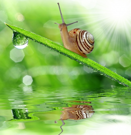 Snail on dewy grass photo