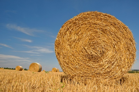 big round bales of straw in the field  photo