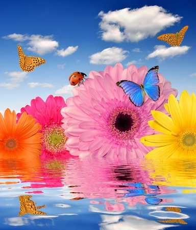 colorful gerberas with butterflies and ladybugs  photo