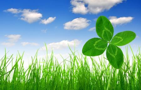 La hierba verde fresca con el trébol