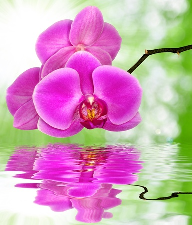 carpel: Beautiful purple orchid on green background