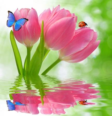 mariquitas: Tulipán con la mariposa y mariquita