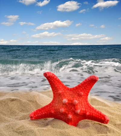 starfish on beach  Stock Photo - 13007329