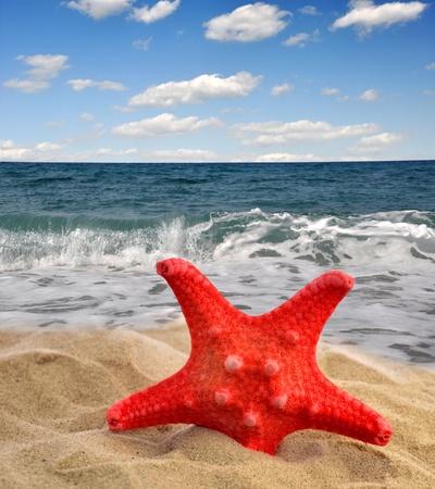 starfish on beach Stock Photo - 13007329
