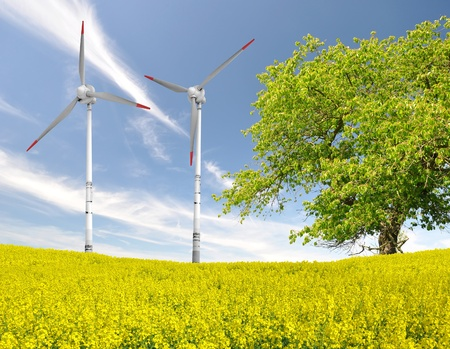 rapeseed field with wind turbine against the blue sky  Stock Photo - 13007696