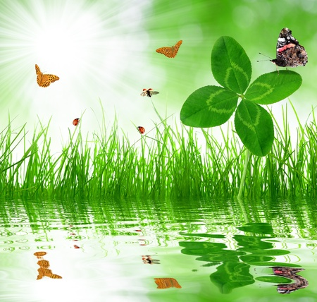 Fresh green grass with clover and butterflies photo