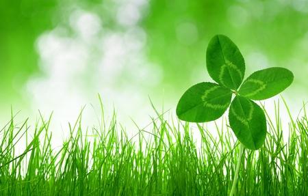 Vers groen gras met klaver op groene natuurlijke achtergrond Stockfoto
