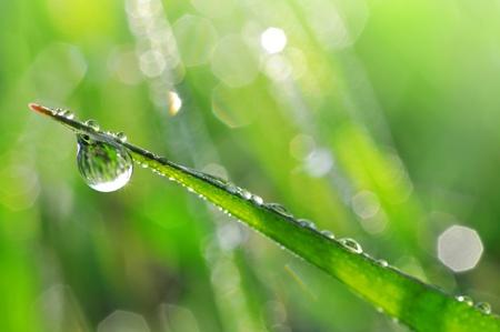 regentropfen: Frisches Gras mit Tautropfen hautnah