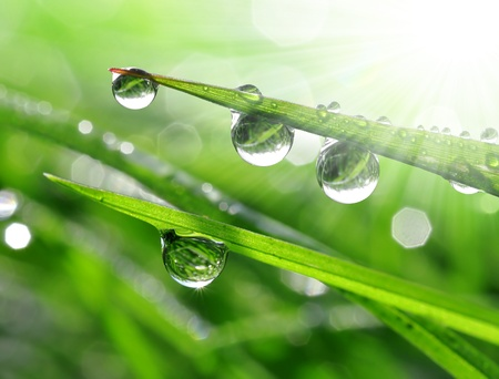 environmental conservation: Fresh grass with dew drops close up