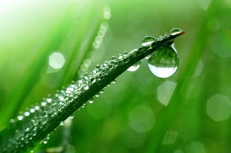 dew: Fresh grass with dew drops close up