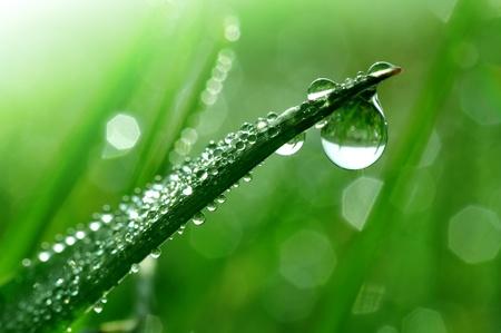 condensaci�n: Hierba fresca con gotas de roc�o de cerca