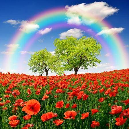 rainbow above the spring landscape with red poppy