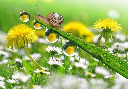 Caracol en la hierba húmeda de rocío