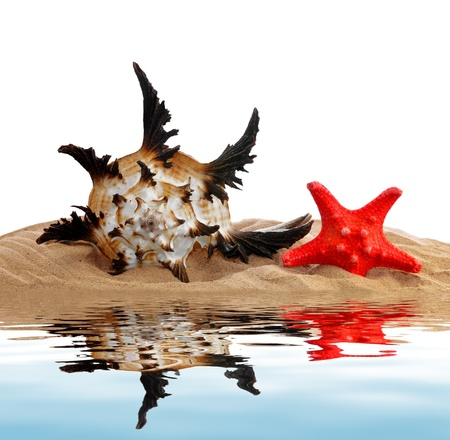 rare animals: tropical sea shell with starfish isolated