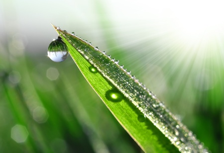 Fresh grass with dew drops close up Stock Photo - 13114694
