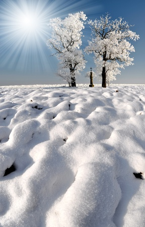 wintrily: Frozen tree Stock Photo