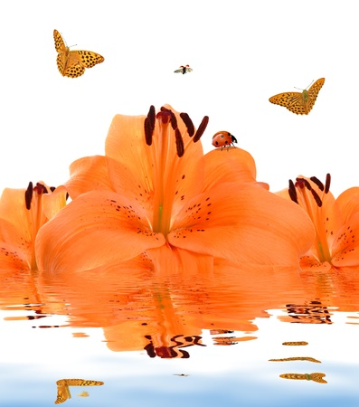 orange lily with butterflies and ladybugs  Stock Photo - 13187232