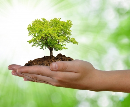 hand tree: growing tree in hand on green background  Stock Photo