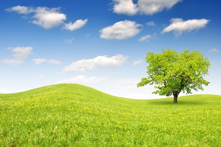 Spring landscape with blue sky Stock Photo - 13233794