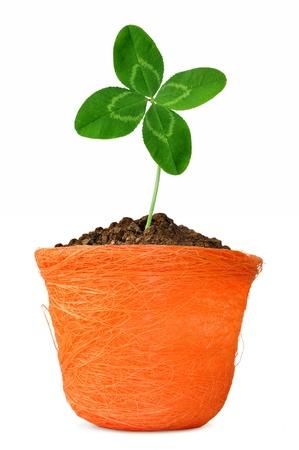 quarterfoil in orange pot