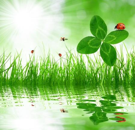 mariquitas: Quarterfoils Tr�bol con mariquitas m�s de una primavera de la hierba fresca