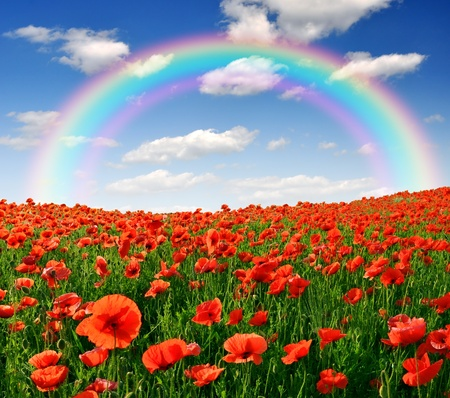 rainbow scene: rainbow above the spring landscape with red poppy field